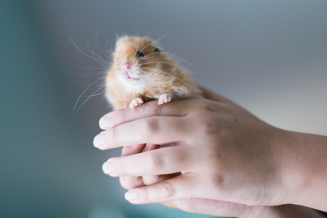 Just call me Hammy P for short.