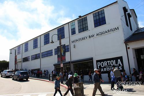 Monterey Bay Aquarium Part 1 Green After The Rain
