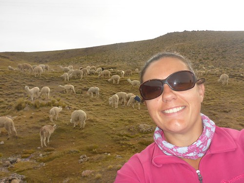 Dee in front of llamas