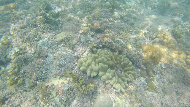 marine life bojo river