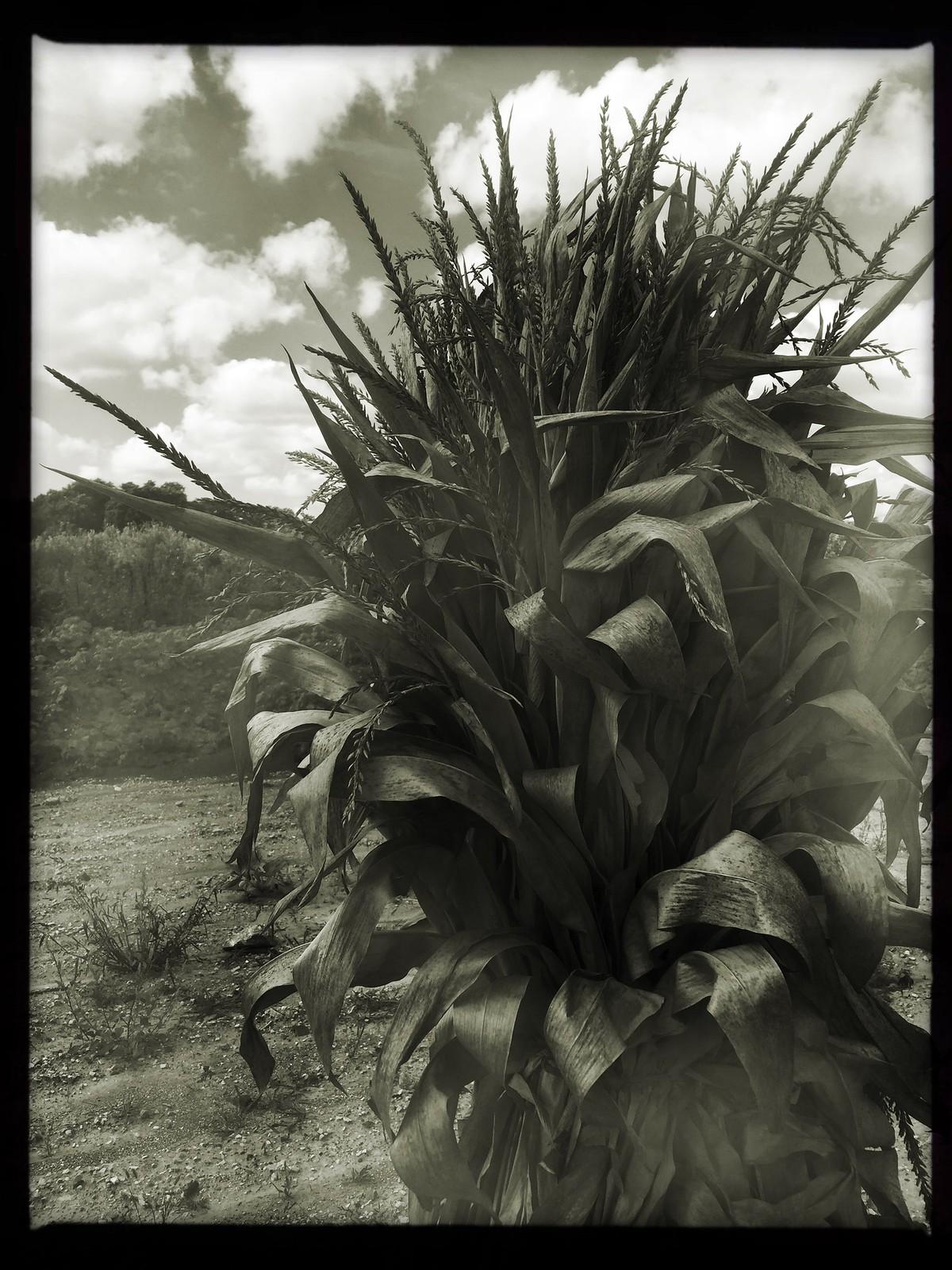 (260/366) Harvest