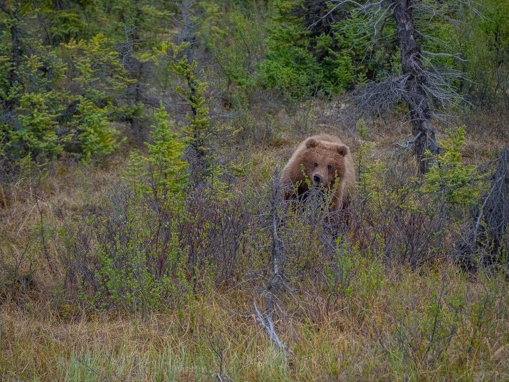 Bear Hug-10