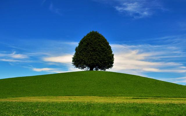 arbre_sans_foret