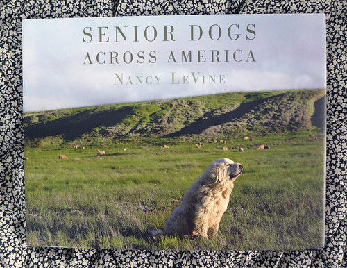 2016-07-15 - Senior Dogs Across America - 0014 [flickr]