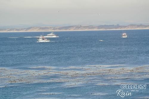 160703f Monterey Bay Aquarium _101