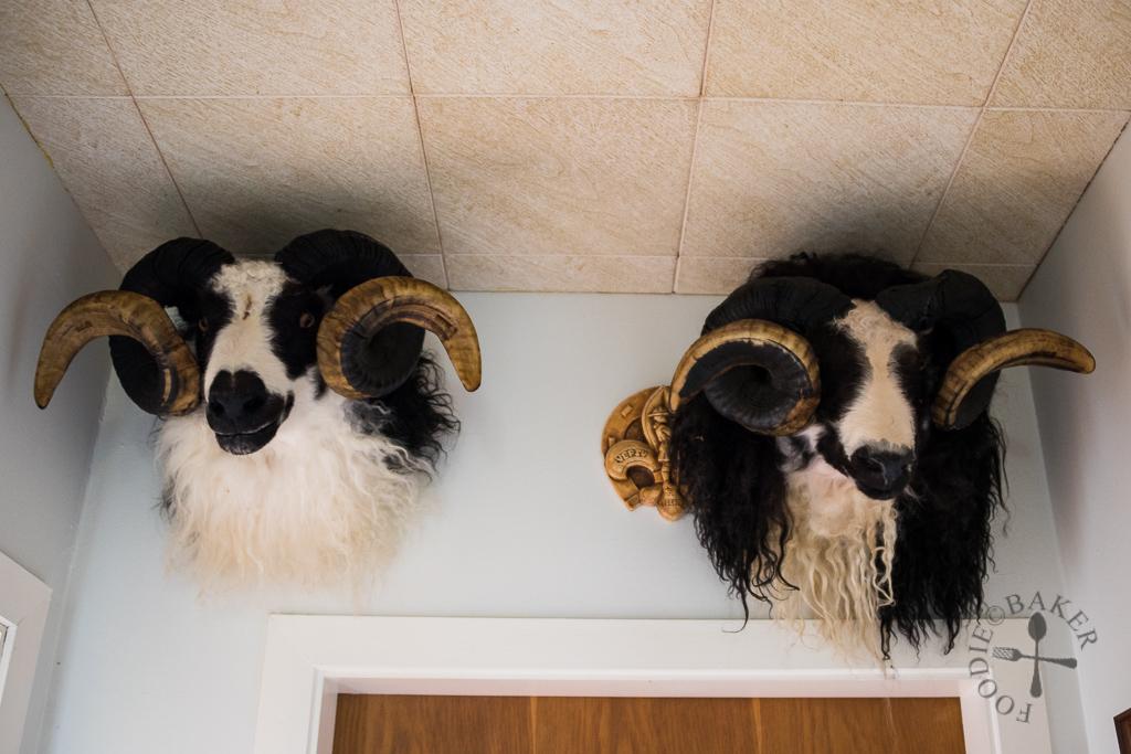 head of sheep