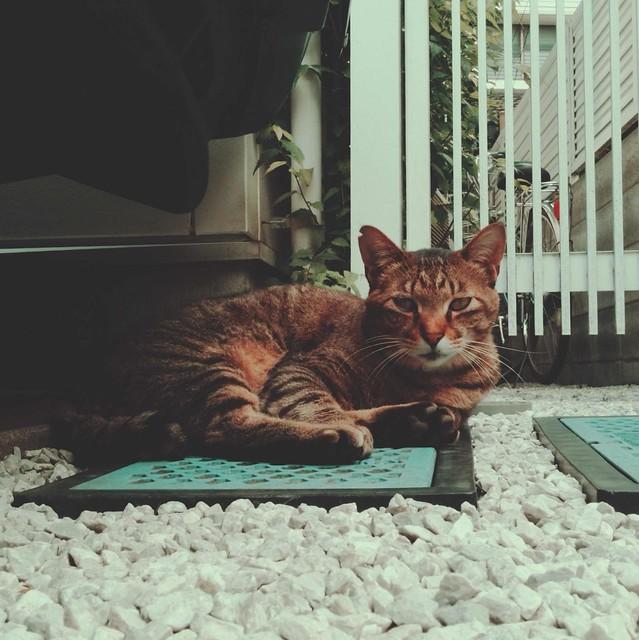 Tabby cat sitting on gravel