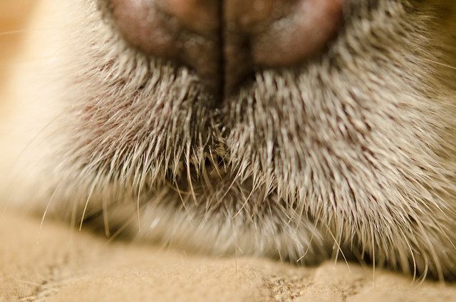 Prickly Little Whiskers