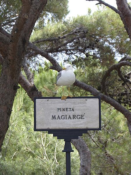 pineta Magiarge