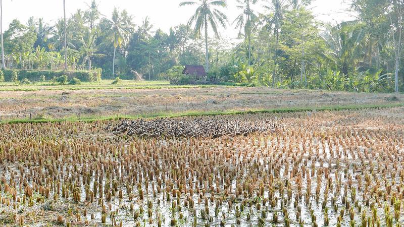 28212768825 1588b2ac3d c - REVIEW - Villa Amrita, Ubud (Bali)