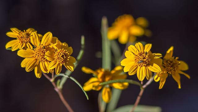 Flower-3-7D1-091616