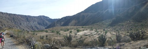Fields at the base of the canyon
