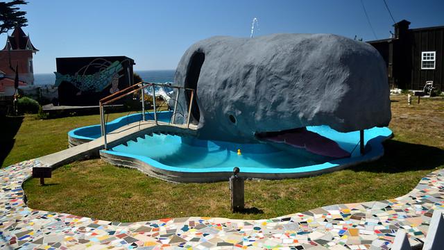 Westport Whale