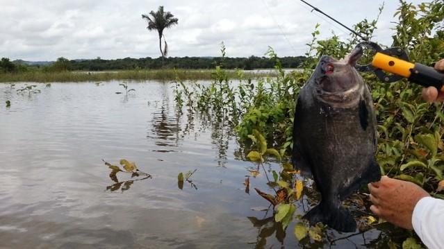 MPF recomenda que governo não emita licença ambiental para porto em Santarém