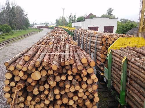 Москаль не пускає рівненську сосну в Угорщину