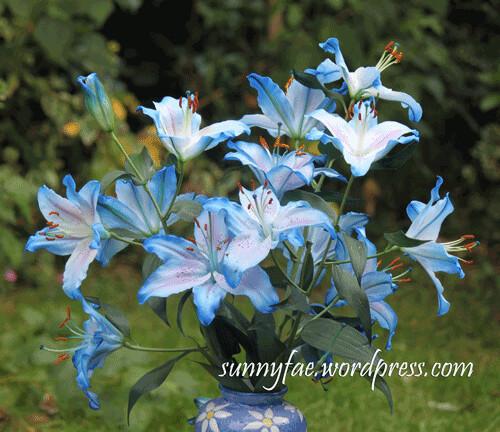 blue-lilies