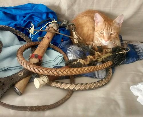 Kilencfarkú macska, paraszt edition