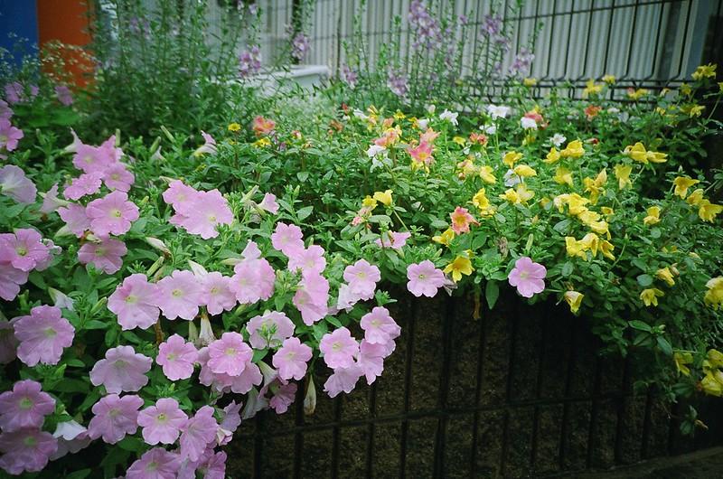 初夏の花壇