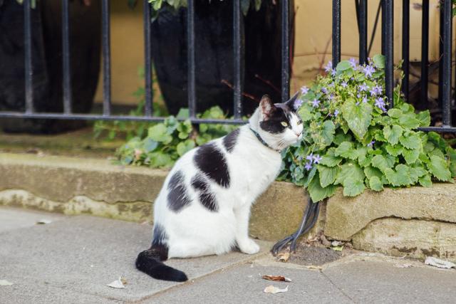 cat in Kentish town
