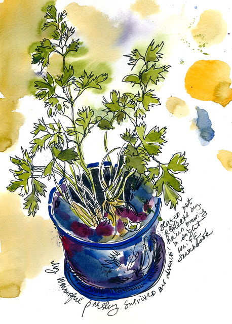Sketchbook #99: Parsley