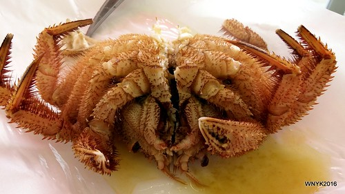 Blanched Hairy Crab