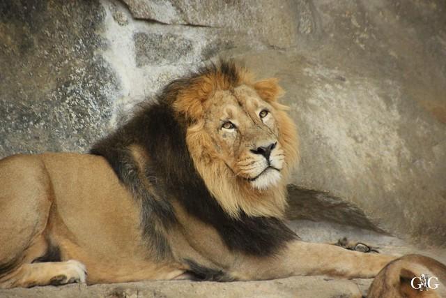 Besuch Tierpark Friedrichsfelde 07.08.16109