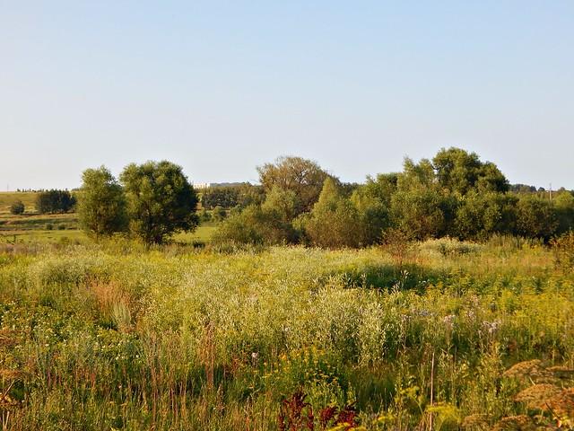 Природа Тульского края. А как у нас жарким летним вечером сладко травы пахнут! Как будто мёд в воздухе. | horoshogromko.ru
