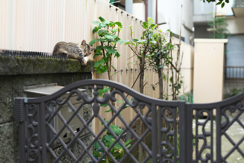 東京路地裏散歩 2016年7月16日