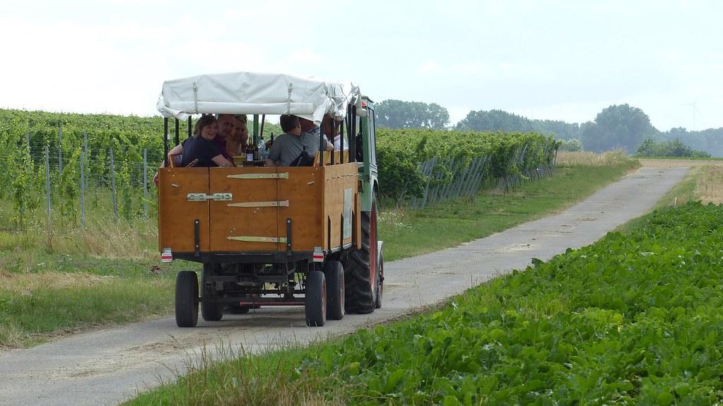 Weinbergsrundfahrt kurz vor Friesenheim