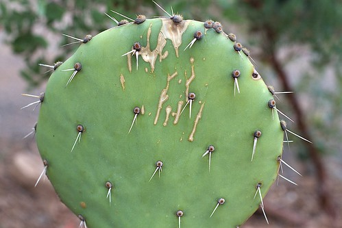Does A Cactus Get Food From Eating Other Organisms