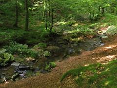 El arroyo Ultzama que da nombre al valle