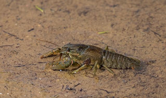 Crawl-Dead-32-7D2-240716